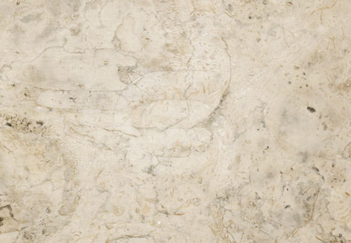 lioz-limestone-polished
